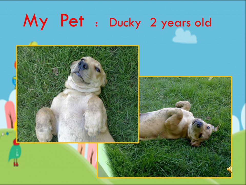 My Pet : Ducky 2 years old