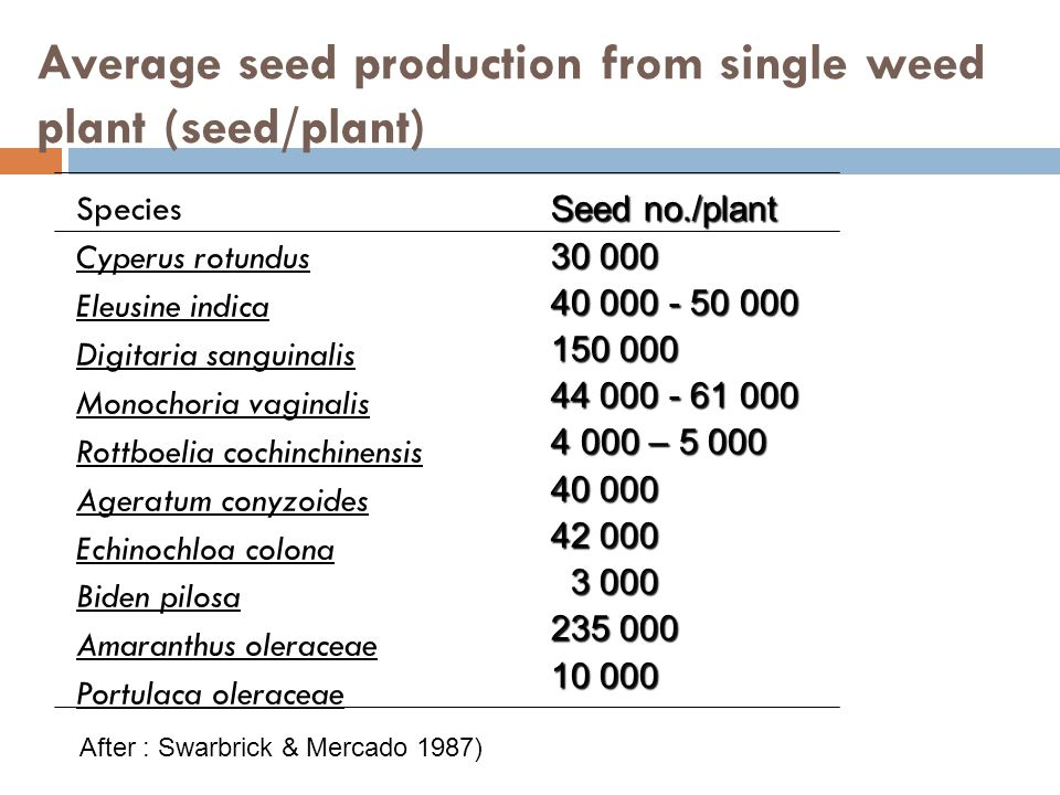 Average seed production from single weed plant (seed/plant)