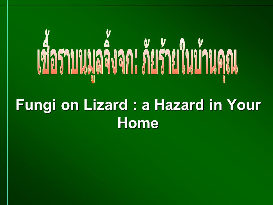 Fungi on Lizard : a Hazard in Your Home