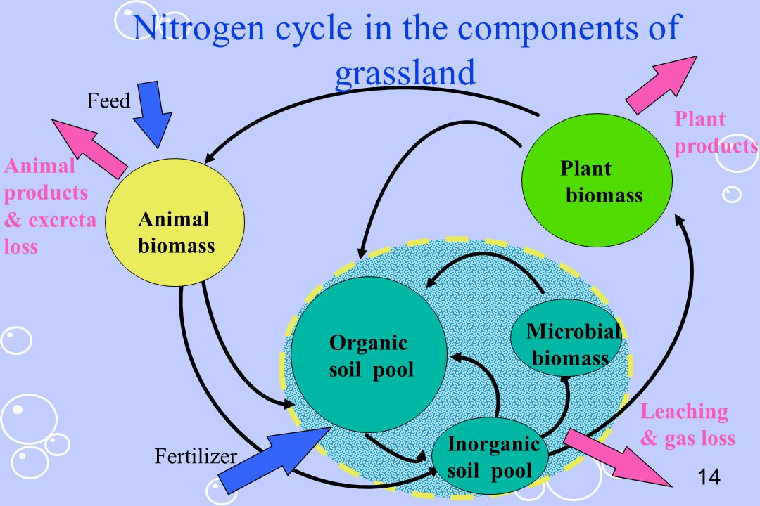 Nitrogen cycle in the components of grassland