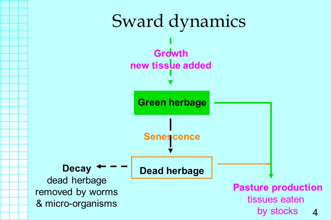 Sward dynamics Growth new tissue added Green herbage Senescence Decay