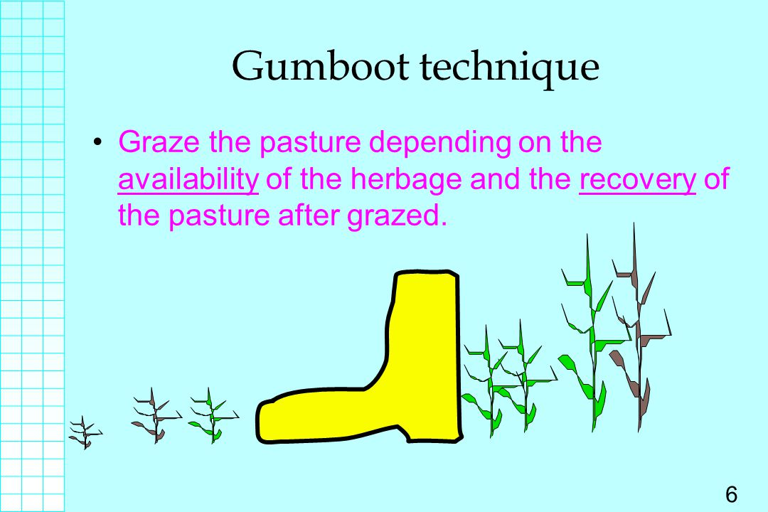 Gumboot technique Graze the pasture depending on the availability of the herbage and the recovery of the pasture after grazed.