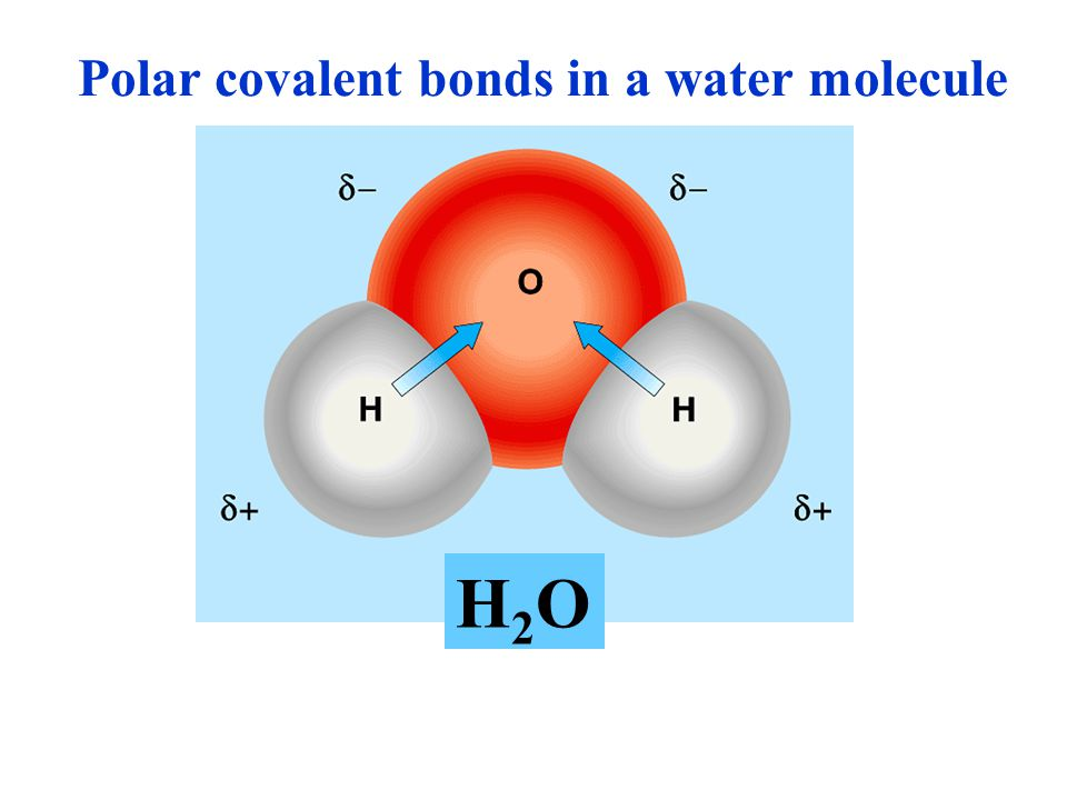 Polar covalent bonds in a water molecule
