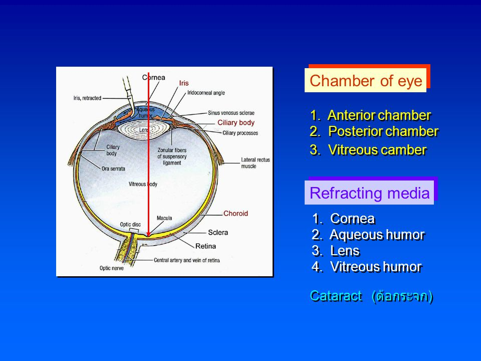 Chamber of eye Refracting media 1. Anterior chamber