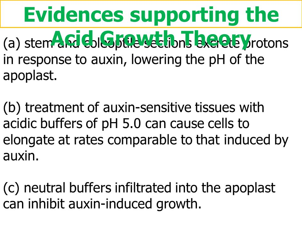 Evidences supporting the Acid Growth Theory