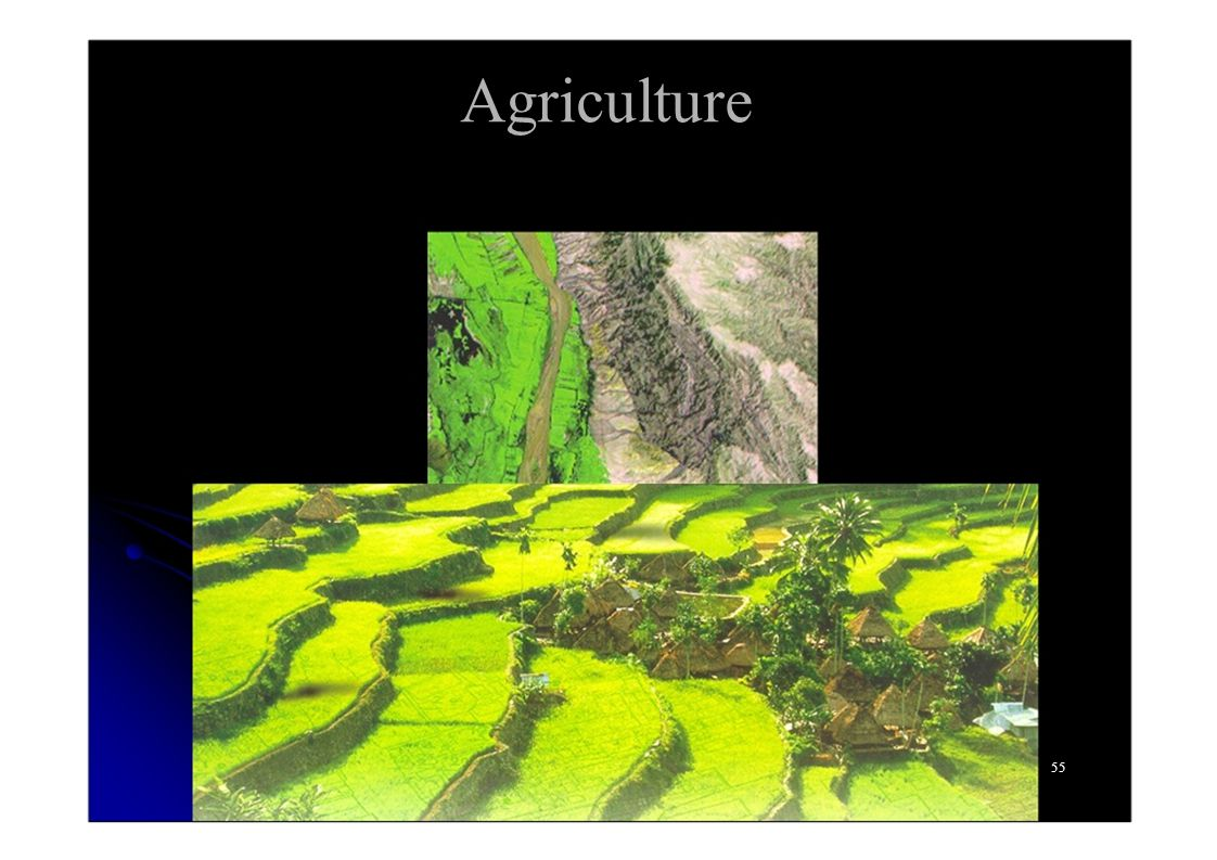 Agriculture 55