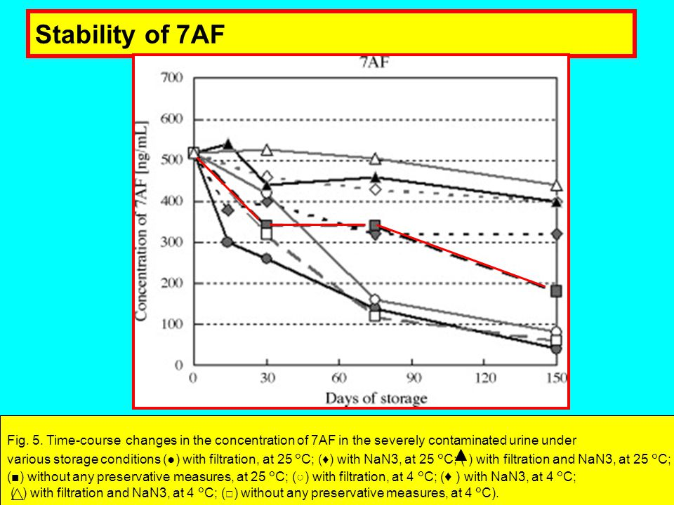 Stability of 7AF Fig. 5. Time-course changes in the concentration of 7AF in the severely contaminated urine under.