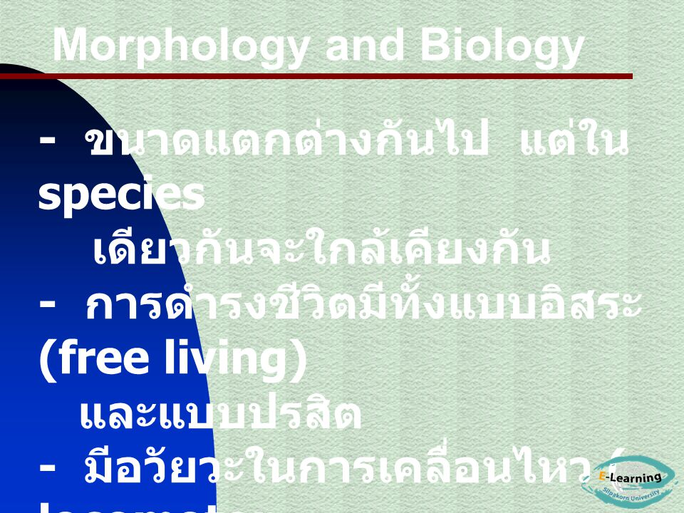 Morphology and Biology