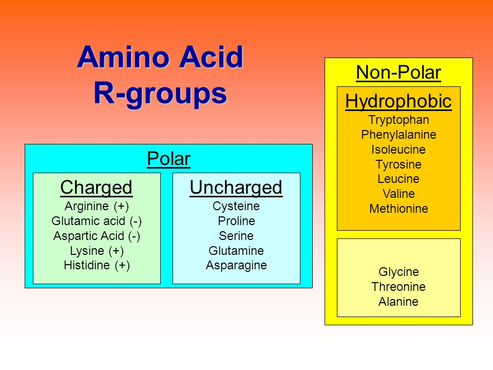 Amino Acid R-groups Non-Polar Hydrophobic Polar Charged Uncharged