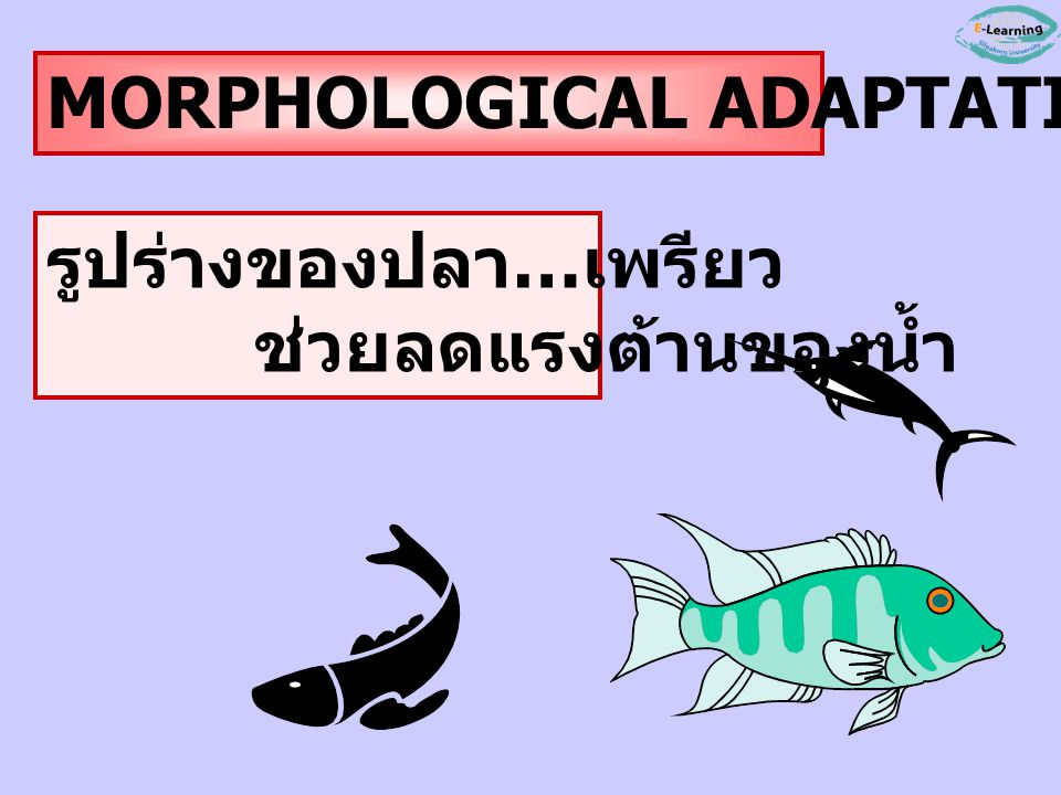 MORPHOLOGICAL ADAPTATION