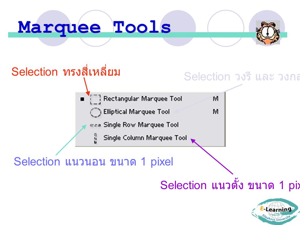 Marquee Tools Selection ทรงสี่เหลี่ยม Selection วงรี และ วงกลม