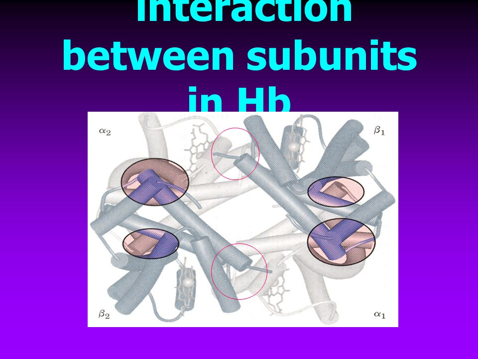 interaction between subunits in Hb