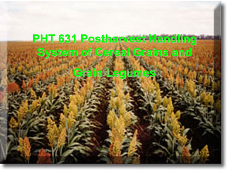 PHT 631 Postharvest Handling System of Cereal Grains and