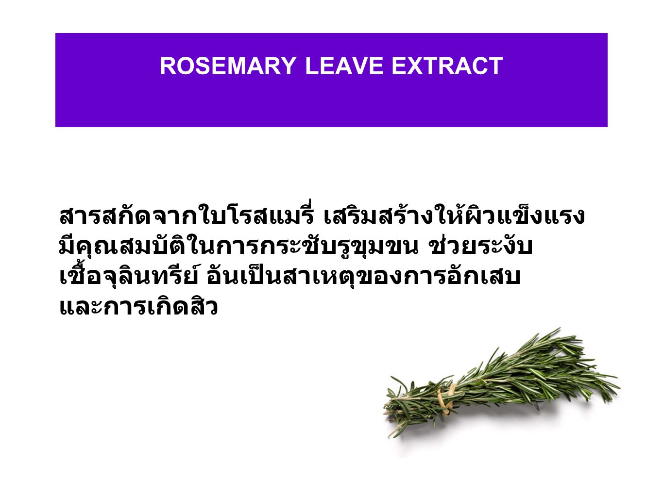ROSEMARY LEAVE EXTRACT