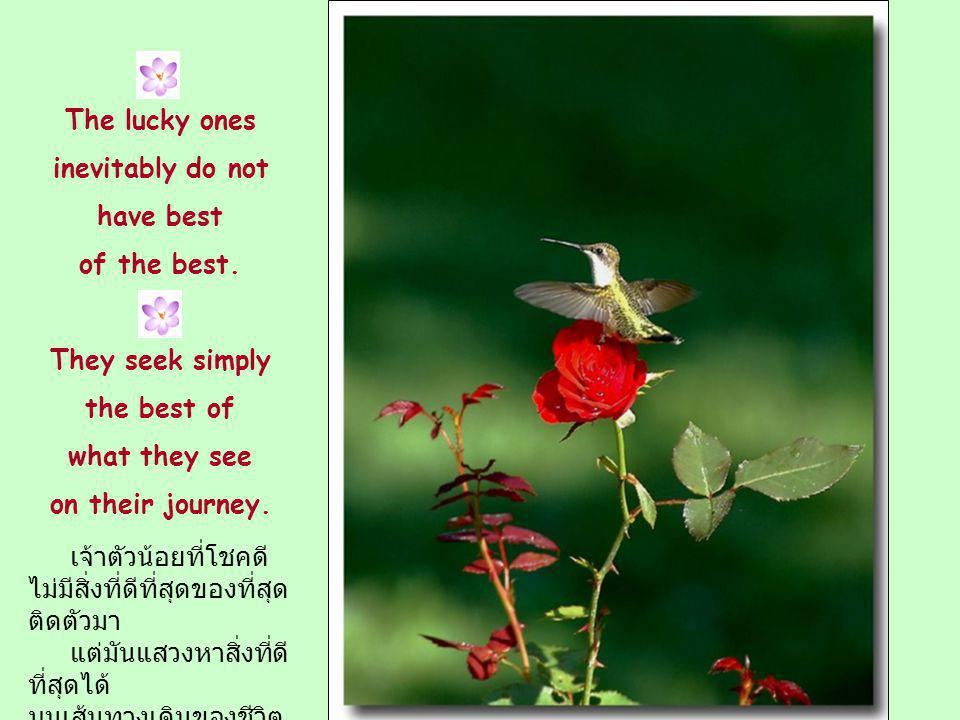 The lucky ones inevitably do not. have best. of the best. They seek simply. the best of. what they see.