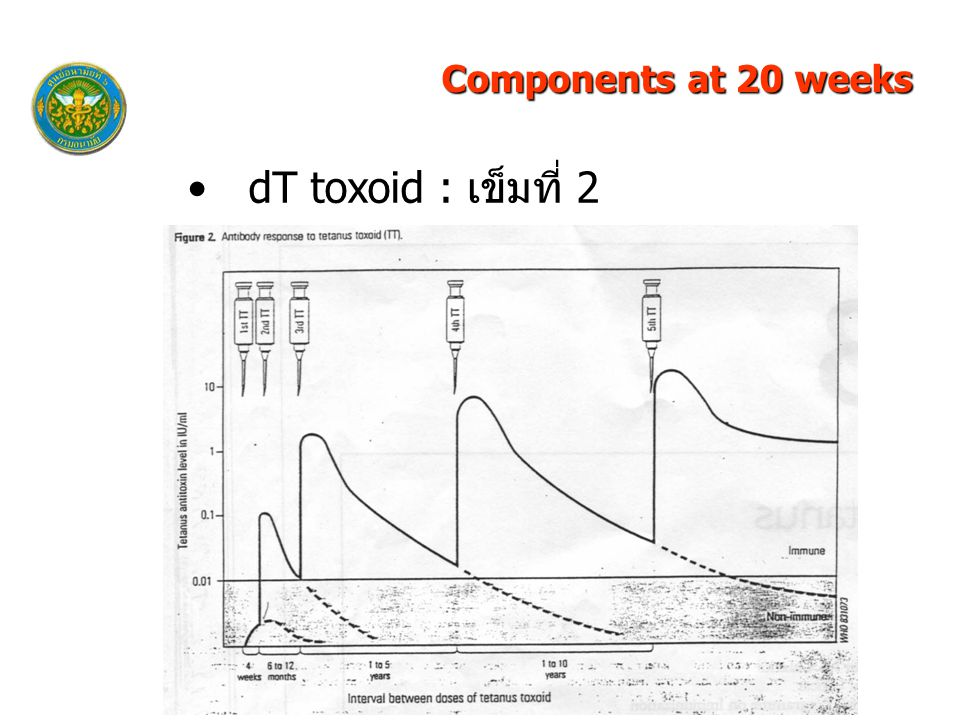 Components at 20 weeks dT toxoid : เข็มที่ 2 33