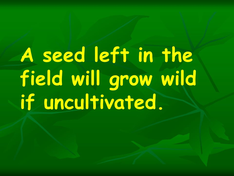 A seed left in the field will grow wild if uncultivated.