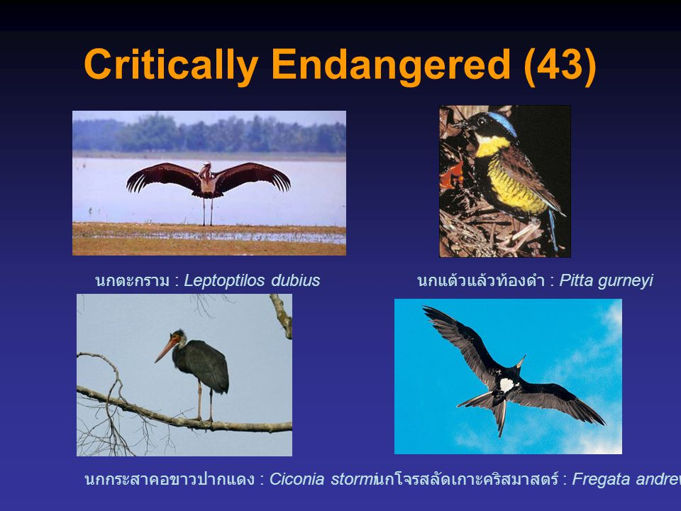 Critically Endangered (43)