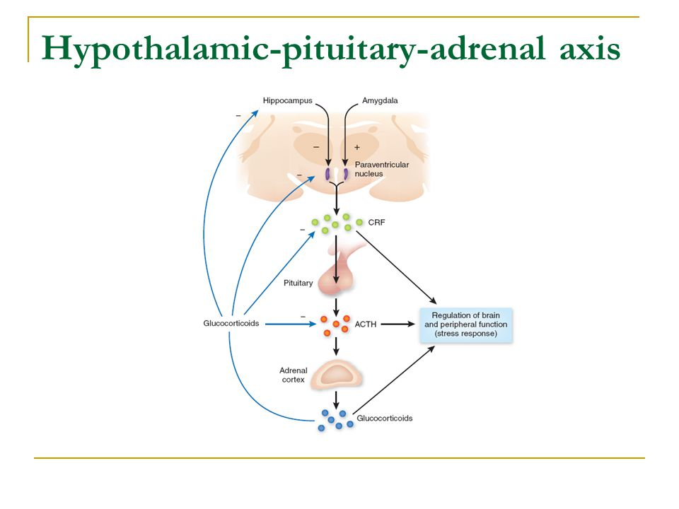 Hypothalamic-pituitary-adrenal axis