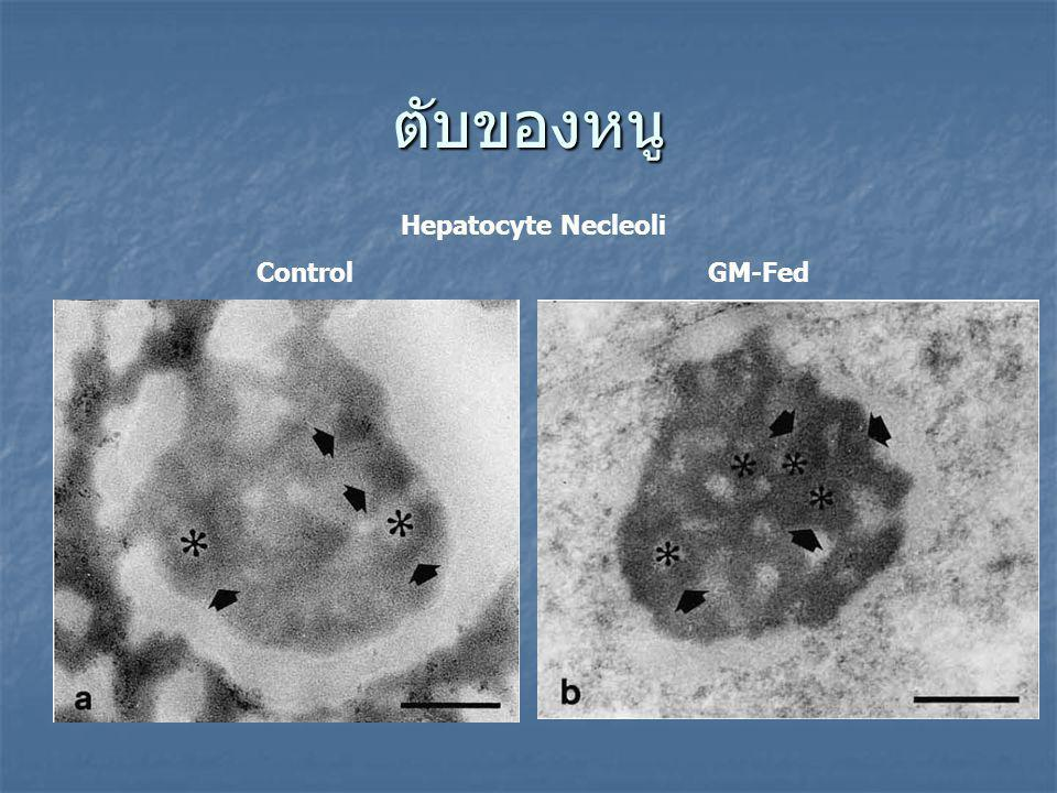 ตับของหนู Hepatocyte Necleoli Control GM-Fed