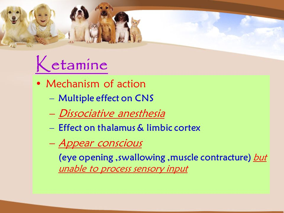 Ketamine Mechanism of action Dissociative anesthesia Appear conscious