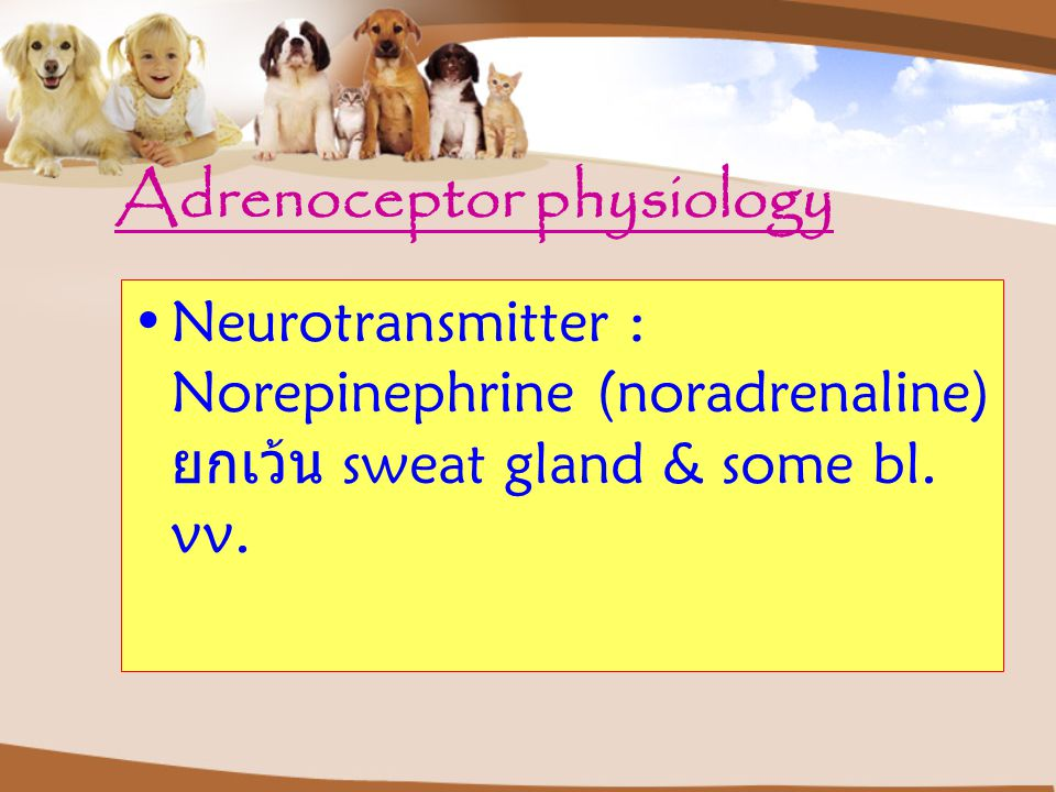 Adrenoceptor physiology