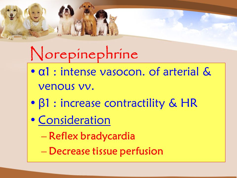 Norepinephrine α1 : intense vasocon. of arterial & venous vv.