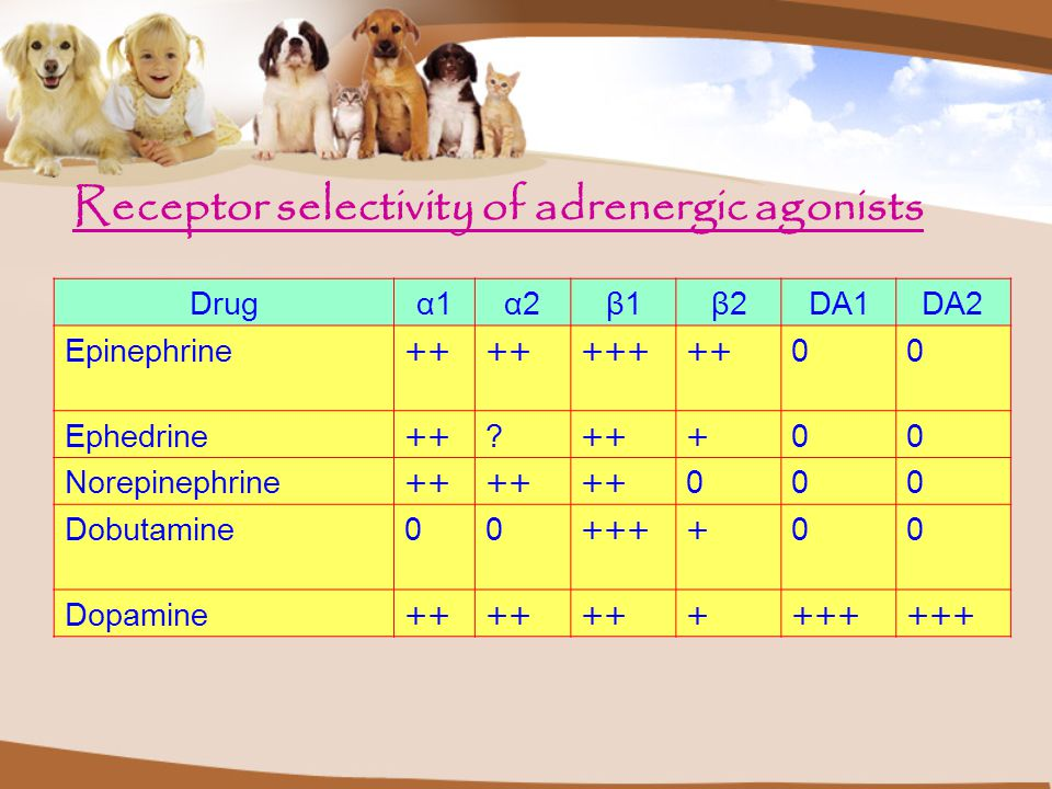 Receptor selectivity of adrenergic agonists