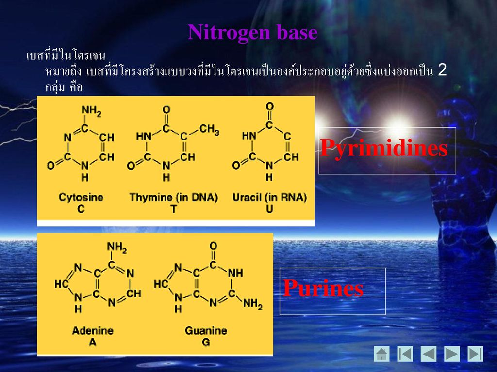 Pyrimidines Purines Nitrogen base