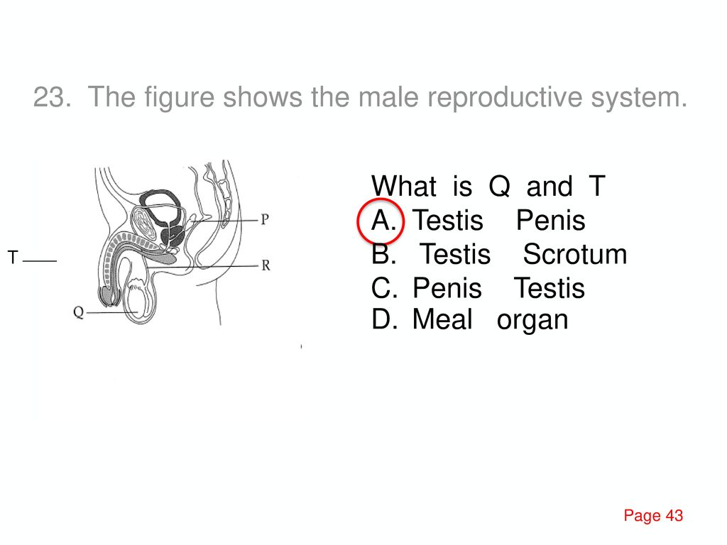 84. The figure shows the organ of a system in the human body.
