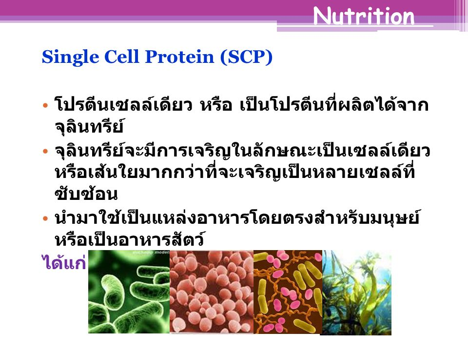 Nutrition Single Cell Protein (SCP)
