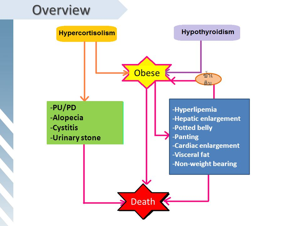 Overview Obese Death PU/PD Alopecia Cystitis Urinary stone