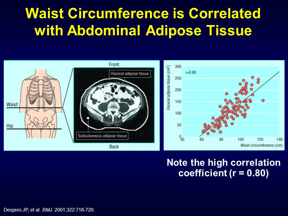 Waist Circumference is Correlated with Abdominal Adipose Tissue