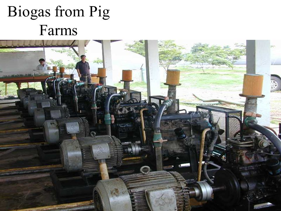 Biogas from Pig Farms 5000 pigs  $31 / day elec.
