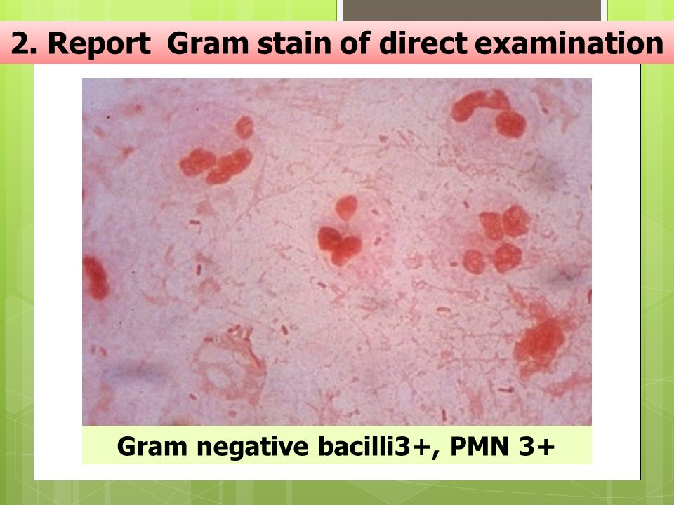 2. Report Gram stain of direct examination