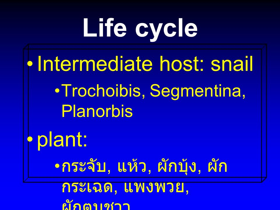Life cycle Intermediate host: snail plant: